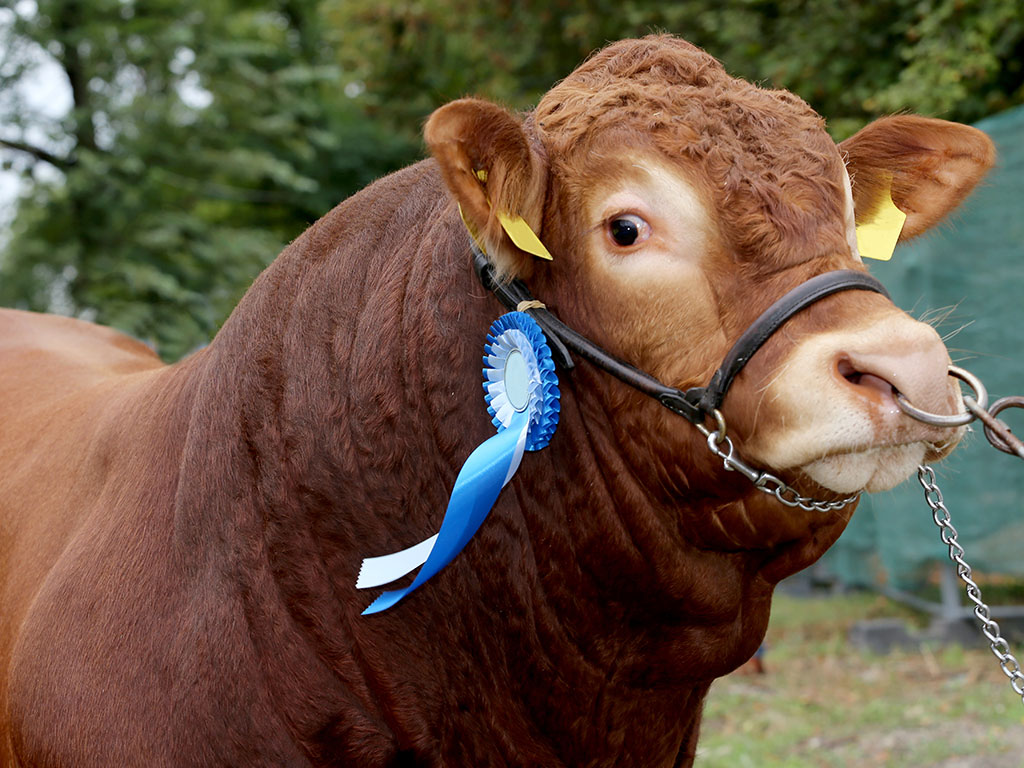 Dealing with Seasonal Cattle Hair? Here are 5 Tips for Better Management